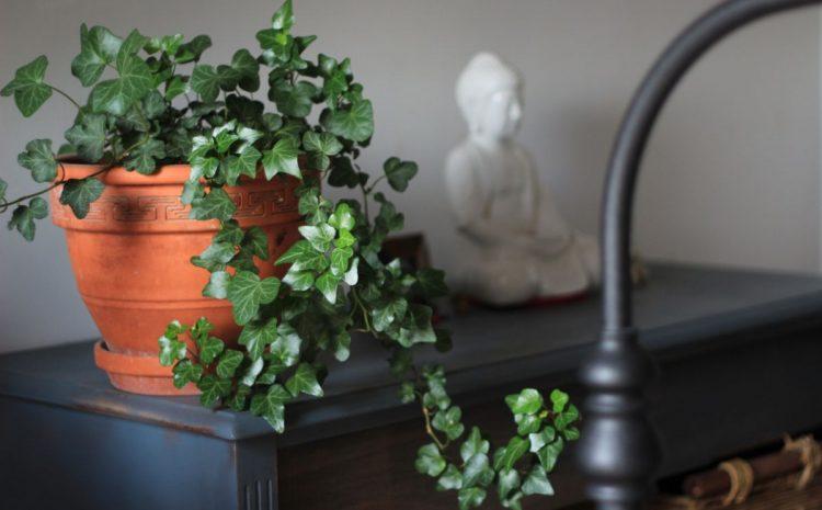 Botanická záhradka, visiace kvetináče či bylinky v kuchyni?
