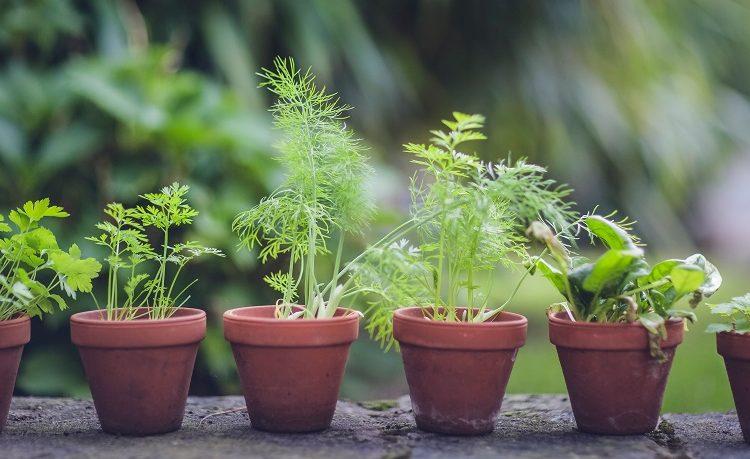 Základné bylinky v kuchyni – čo by vám nemalo chýbať?